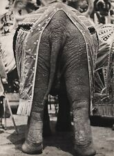 1940s Vintage 16x20 CIRCUS CARNIVAL ELEPHANT REAR END Butt Animal Ringling Bros.