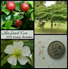 20+ JAMAICAN CHERRY SEEDS (Muntingia calabura) Panama Berry Exotic Tree Fruit
