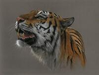 Original Pastell Zeichnung Tiger Tigris Wildlife pastel animal Art by A. Franke