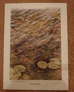 Pike Fishing Angling Art Print Fisherman Hand Signed by Artist Richard Smith