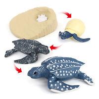 Animaux Cycle de vie modèle de jeu tourteau tortue jouet Cycle de croissance