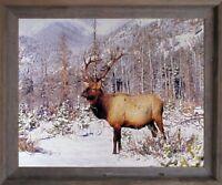 Big Bull Elk Antler Mountain Wildlife Animal Wall Decor Barnwood Framed Picture