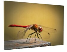 DRAGONFLY INSECT CANVAS PICTURE PRINT WALL ART CHUNKY FRAME LARGE 1875-2