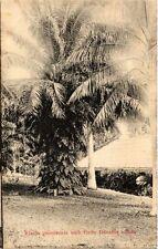 SINGAPORE PC Elacis guineenis with ferns Davallia solida (a1477)
