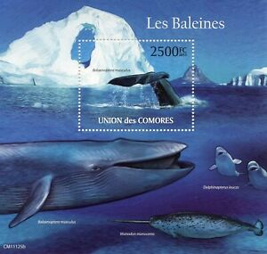 Comoros Marine Animals Stamps 2011 MNH Whales Blue Whale Fauna 1v S/S