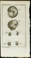 1777 - Gravure insecte & escargot - Zoologie - Académie Royale des Sciences