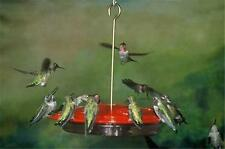 ASPECTS #143 HummZinger EXCEL, 16 oz HUMMINGBIRD FEEDER, Made in the USA