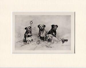 BORDER TERRIER RARE 1897 ANTIQUE DOG PRINT by ARTHUR WARDLE READY MOUNTED
