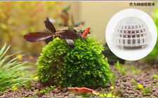 Aquarium Cultivation moss ball for Crystal Red Shrimp tank (not Include moss)