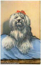 PORTRAIT DE CHIEN. YORKSHIRE TERRIER.