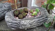 Paire de jardin en pierre de petites petites log ALPINE Sempervivum creux Planters