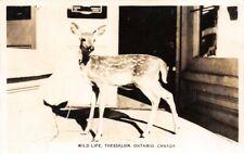 Wild Life Thessalon Ontario Canada Real Photo RPPC
