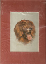 Matted Print: Irish Red Setter by Joel Kirk