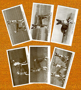 BASENJI SET OF SIX NAMED DOG COLLECTABLE TRADE CARDS GREAT GIFT