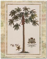 Tropical Palm Tree Vintage Fig 526 Contemporary Wall Decor Art Print (16x20)