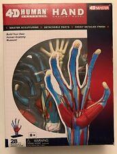 4D Human Anatomy Hand Anatomy Model # 26057 4D Master NIP Highly Detailed Finish