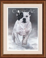 STAFFORDSHIRE BULL TERRIER limited edition fine art dog print by Lynn Paterson