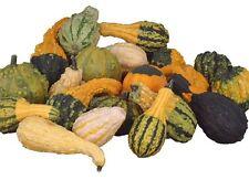 Gourd Seeds, Decorative Mix, 20 Seeds