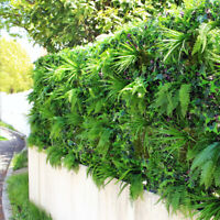 100Pcs Seeds Hedera helix Ivy Ivies Herb Plants Rare Kinds in Decor Home Garden