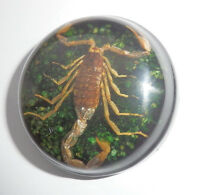 Insect Cabochon Golden Scorpion 38.5 mm Round inner 36mm dark green 1 pc Lot