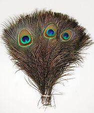 "25 Pcs PEACOCK TAILS Natural Feathers 10-12"" Craft/Art/Dress/Bridal/Hats/Pads"