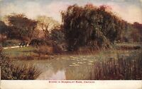 Chicago Illinois~Humboldt Park Bench Nr Marshy Lily Pond~VO Hammon 1912 Postcard