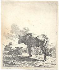 Karel Dujardin - Der stehende Ochse und das liegende Kalb 1658 Radierung Etching