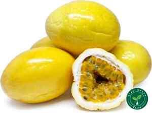 20 seeds Maracuya - YELLOW PASSIFLORA - Passion Fruit + 5 seeds Sunflower