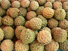 Sugar-Apple - ANNONA SQUAMOSA - 10 Seeds Vegetables/ Fruits