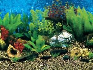 "15"" TALL Shells Background Poster for Aquarium / Vivarium / Fish Tank / Viv"