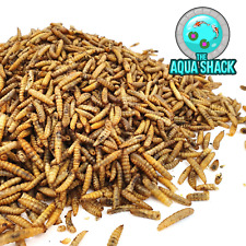 Premium Dried Large Chubby Mealworms | Reptile Food Bearded Dragon Reptile Gecko