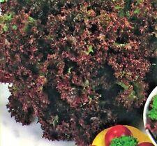 Vegetable Lettuce Lollo Rossa Appx 1200 seeds