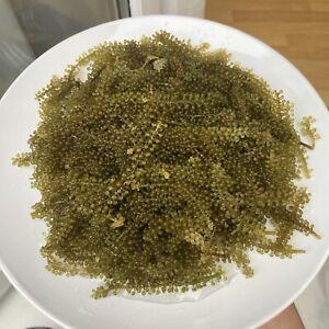 Sea Grapes Dehydrated Sea Grape Lato Healthy Food 100g , UK Seller *Clearance*