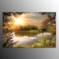 Framed Canvas Art Prints Swimming Swan Wall Art Canvas Painting For Home Room