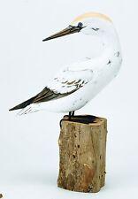 ARCHIPELAGO Hand Carved Wooden Birds - Gannet Preening