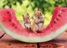 Chipmunk Watermelon Avanti Humorous Funny Birthday Card