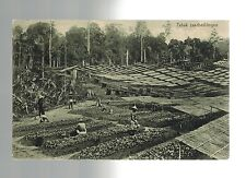 Sumatra to Holland Men Working in Fields Kleingrothe Real Picture Postcard Cover