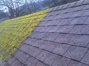 Moss Killer (roof / patio / hardsurface) fast acting formula.