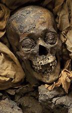 Framed Print - Human Mummified Remains (Picture Egyptian Mummy Sarcophagus Art)