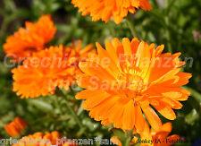 ringelblume Calendula heilpflanze GIARDINO DEL CONTADINO 50 SEMI