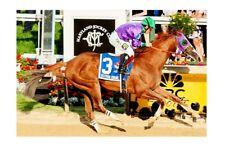 CALIFORNIA CHROME - USA 2014 Kentucky Derby winner modern Digital Photo Postcard