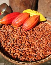 raw cocoa beans... Great Quality Seeds Picked From Cocoa Trees In The Caribbean