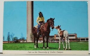 Horses Pals on the University of Dallas Campus TX to Fremont Cal '71 Postcard D6