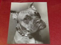 """[Fotografía] Piedra Auradon / Argentique 1940/50"""" Perro"""" 22x18 Dog"""