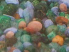 20 Mix/Random Ramshorn Snails ( Feeder snails)