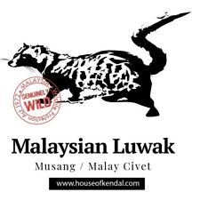 Coffee, Wild LUWAK Liberica Malaysia, Authenticity Guaranteed Best For Espresso