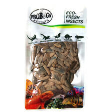 Probugs Blk Soldier Fly Larvae feeder insects for Turtle, Frog, Koi, Med-Lg Fish