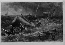 WHALE HUNTING WITH HARPOON SHIPS CAPSIZED BOAT FISHERMEN OAR ROWING WHALE HUNT