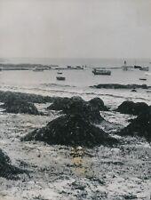 LOCTUDY c. 1950 - Bateaux Plage Tas de Goémon Finistère - Div 11946