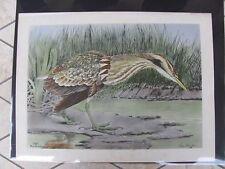 Original  Rex Brasher #190  Hand Colored Bird Print  Bihern Signed  #190REX2 DSS